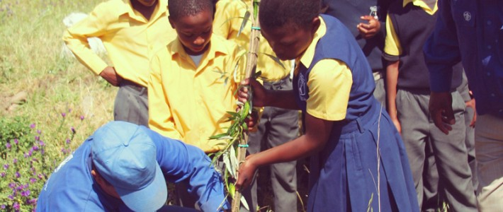 Tree Planting social carbon programme